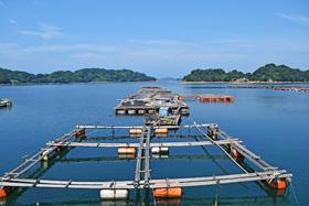 水産養殖の仕事内容