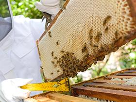 養蜂家の仕事内容