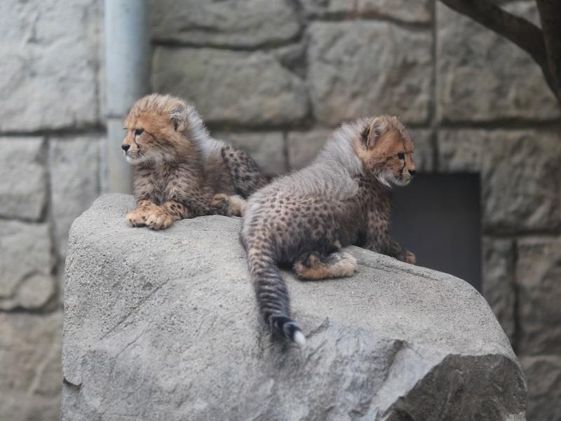 日本の希少動物を守るしくみ