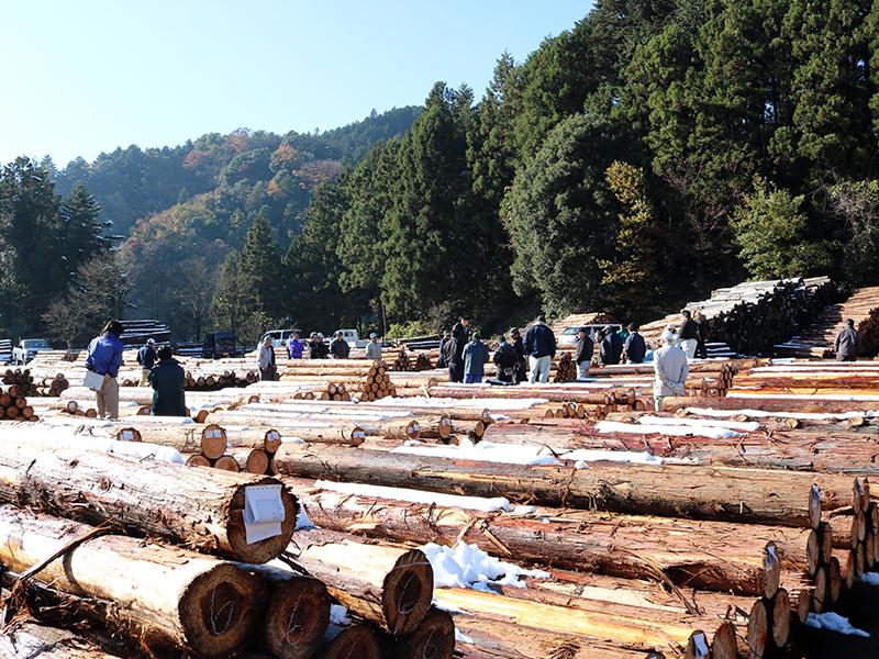 原木が売り買いされる市場