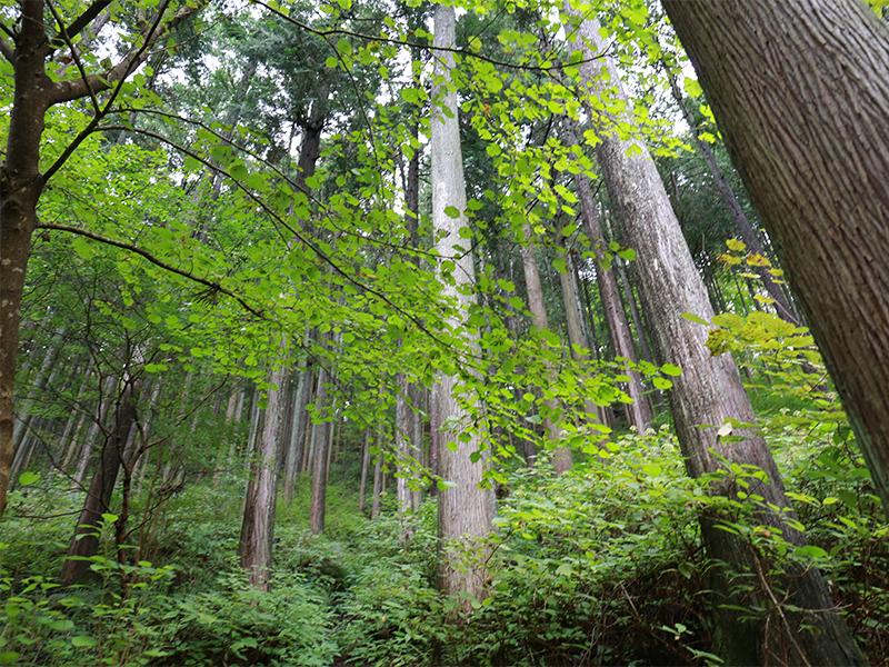 林業にはたくさんの作業がある