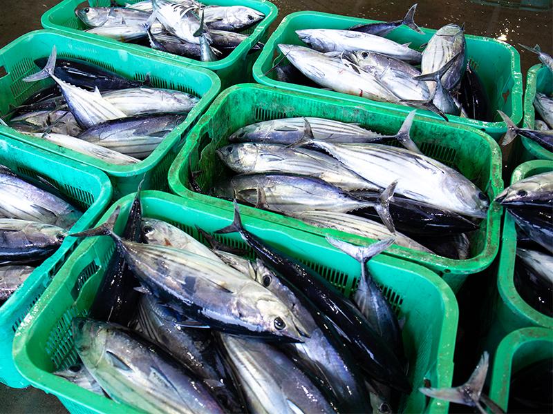 子どもたちに魚や漁業に親しんでほしい