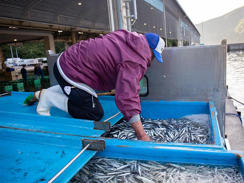 魚を仕入れた<ruby>瞬<rt>しゅん</rt></ruby><ruby>間<rt>かん</rt></ruby>から加工が始まる
