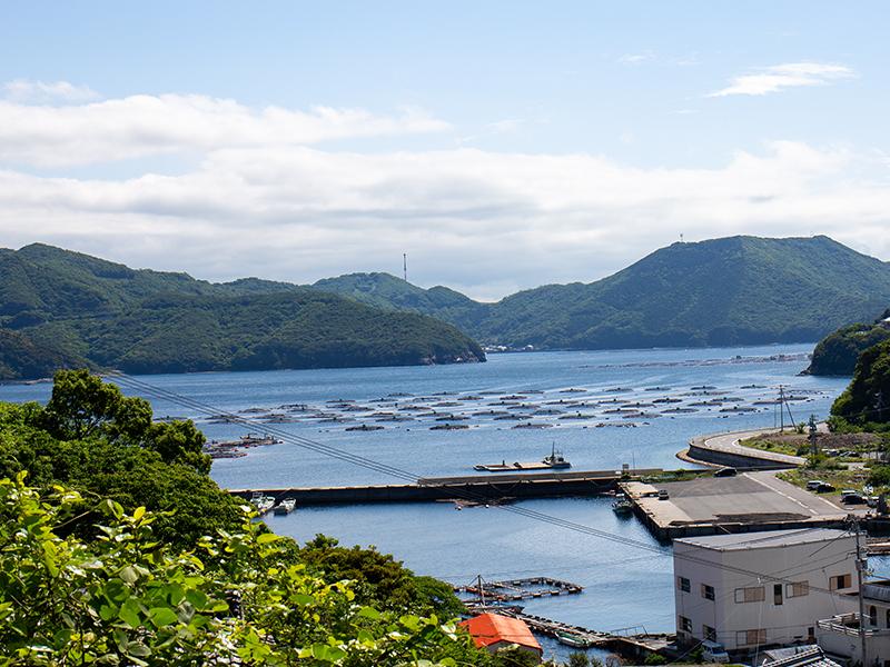 愛南の海はマダイの養殖にぴったり