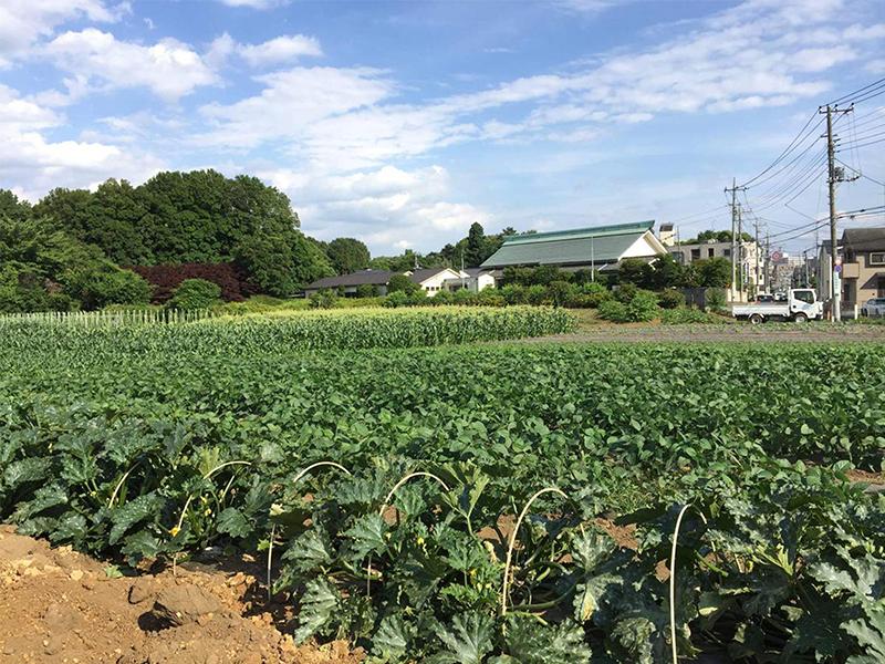 東京で100年続く農園を営む