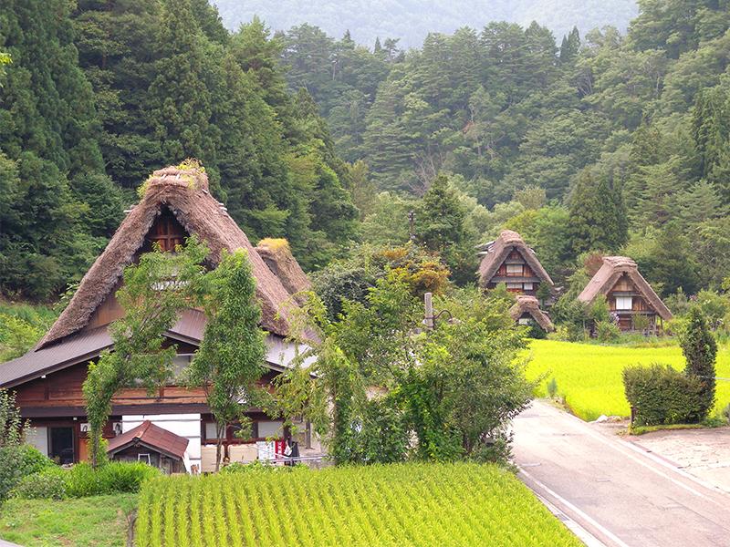 屋根を葺き替え,伝統的な住居を守る
