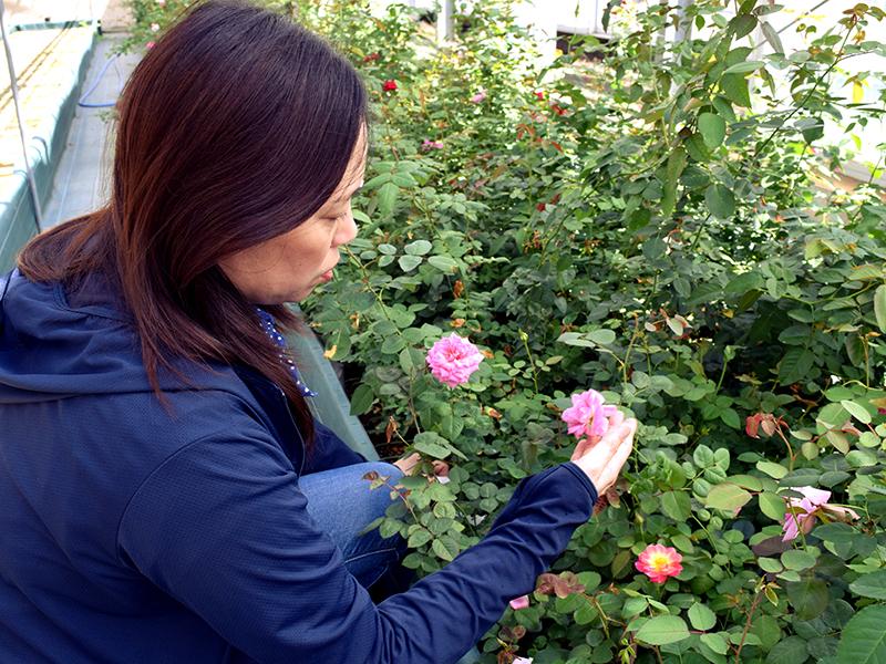 バラの成長に寄り添いながら,作業を行う
