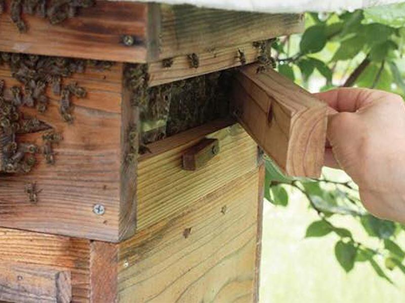 ミツバチが自然な<ruby>環<rt>かん</rt></ruby><ruby>境<rt>きょう</rt></ruby>で<ruby>暮<rt>く</rt></ruby>らせるように