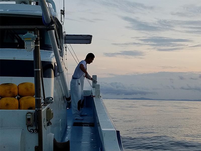 高級魚を一本釣りで