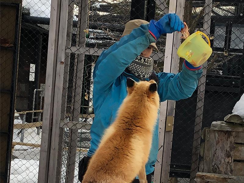 掃除と餌やりを中心に,動物たちの世話をする