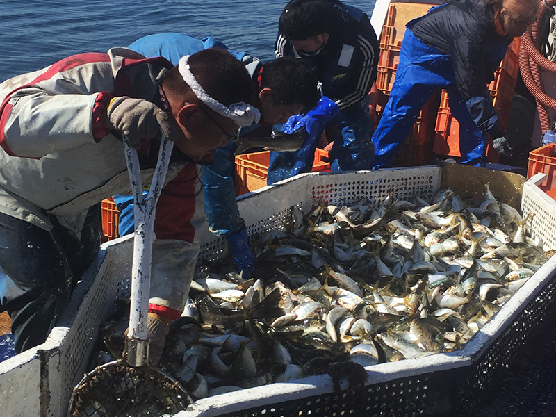 自然の資源に頼る漁業の宿命