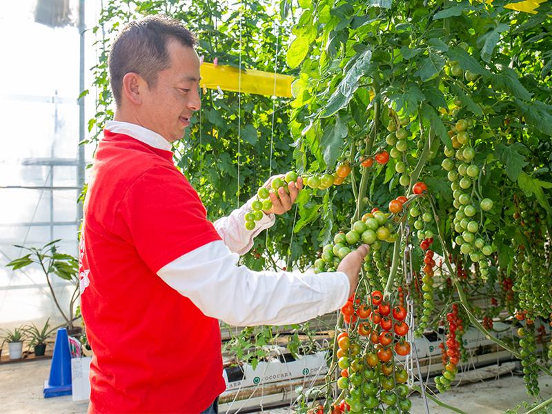 約束したトマトを,約束した<ruby>品<rt>ひん</rt></ruby><ruby>質<rt>しつ</rt></ruby>で作り出す
